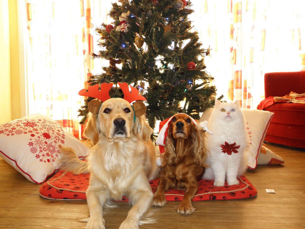 Immagini Animali Natale.Natale E Animali Idee Regalo Animali Pucciosi