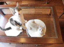 crazy_cat_cafe_milano_animali_pucciosi