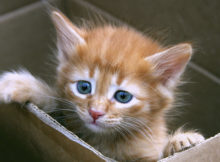 gatto_in_casa_animali_pucciosi