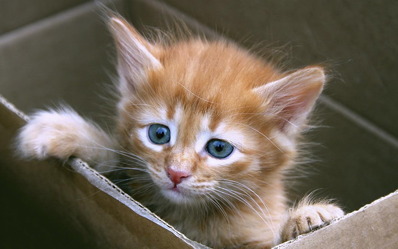Gatto in casa un nuovo arrivo in famiglia animali pucciosi for Animali pucciosi
