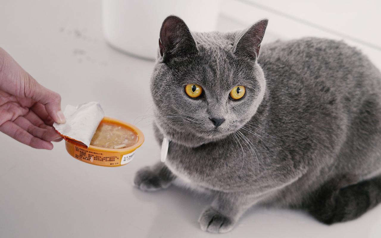 gatto_in_casa_cibo_animalipucciosi_pucciosi