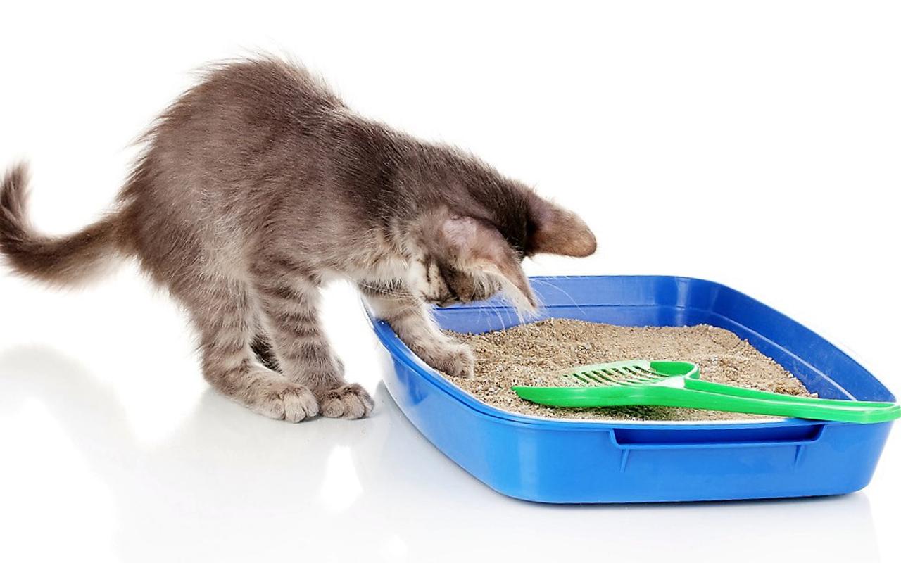 gatto_in_casa_lettiera_animalipucciosi_pucciosi.jpg