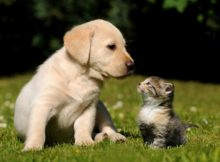 piante_pericolose_per_cani_e_gatti_animali-pucciosi_04