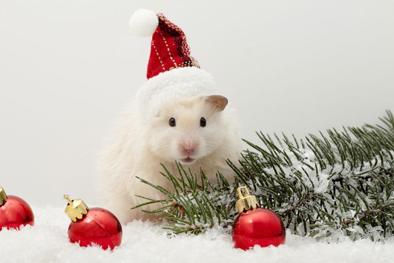 Immagini Gratis Natale.Biglietti Natale Gratis Da Stampare A Casa Propria Animali