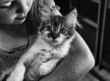 gatti_anallergici_animali_pucciosi