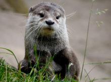 Parco nazionale del Pollino: Gli animali del parco più grande d'Italia