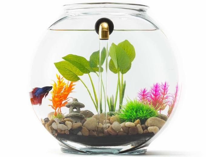acquario_oggetti_per_animali_pucciosi