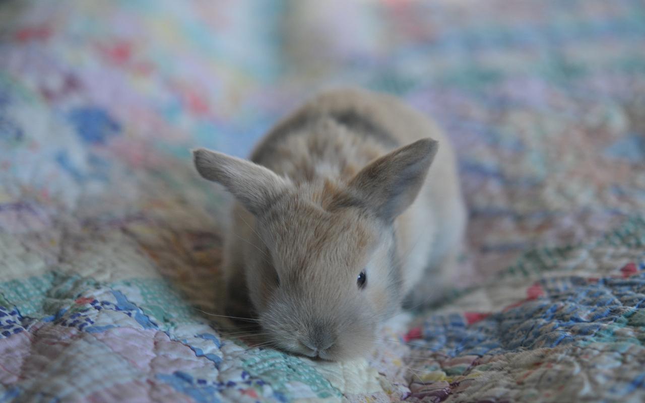 cura-dei-conigli_animali-pucciosi-coniglio-nano_02