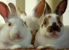 Cura dei conigli: i 10 errori più comuni!