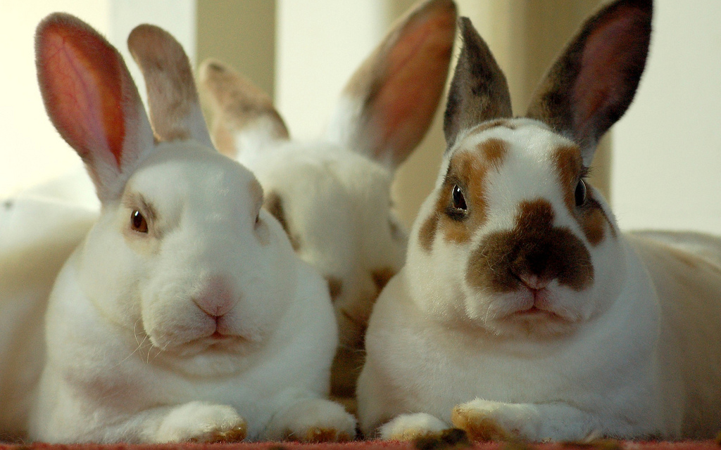 Cura dei conigli i 10 errori pi comuni animali pucciosi for Animali pucciosi
