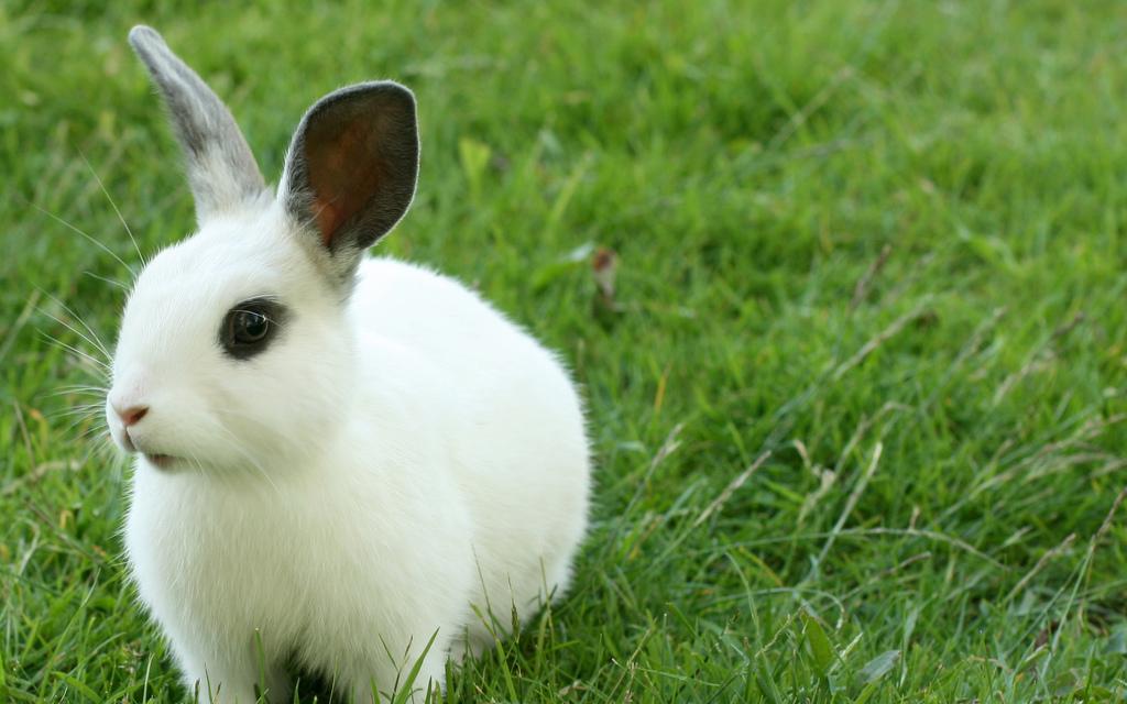 cura-dei-conigli_animali-pucciosi-coniglio-nano_04