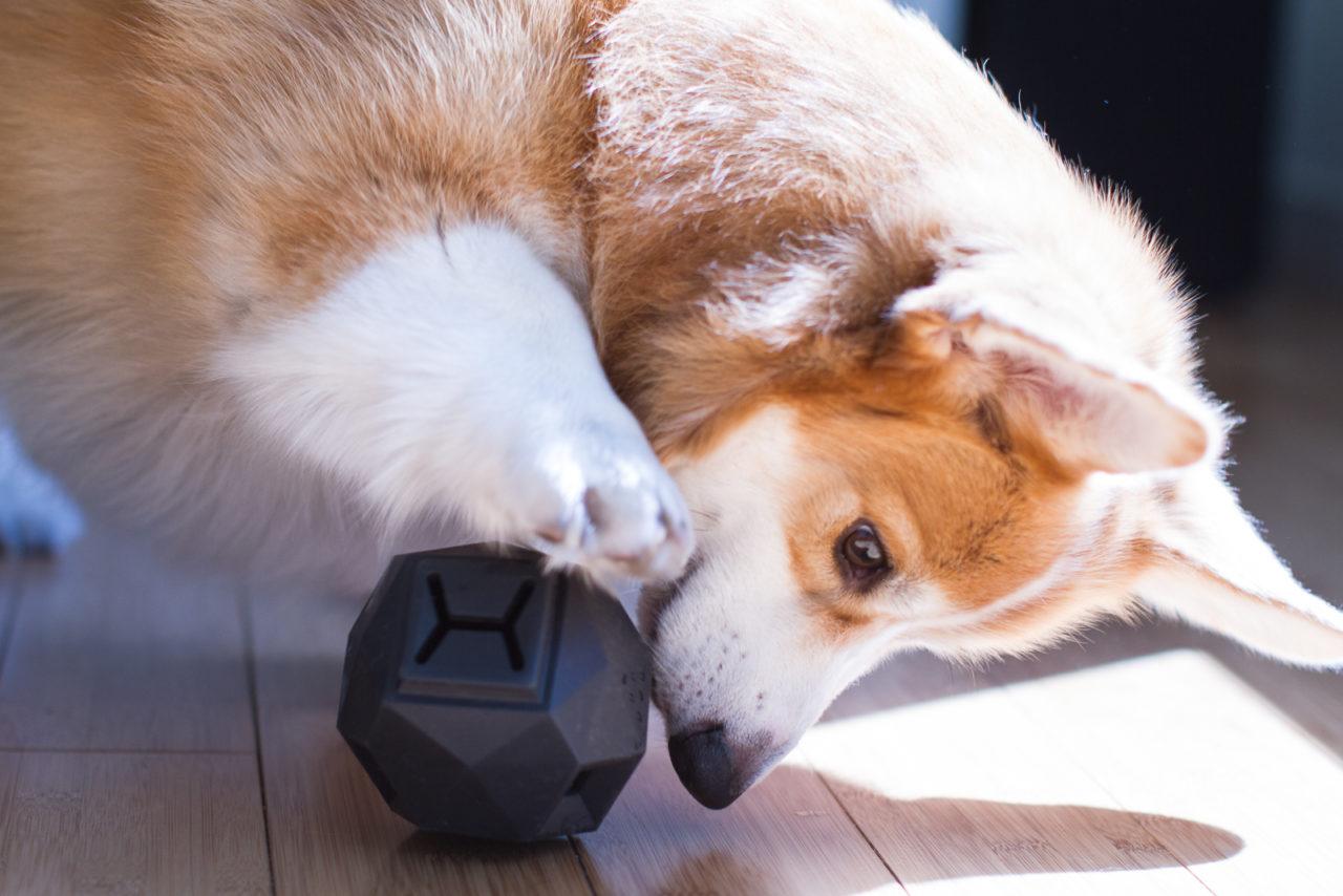 Gli oggetti per animali finanziati su kickstarter for Animali pucciosi