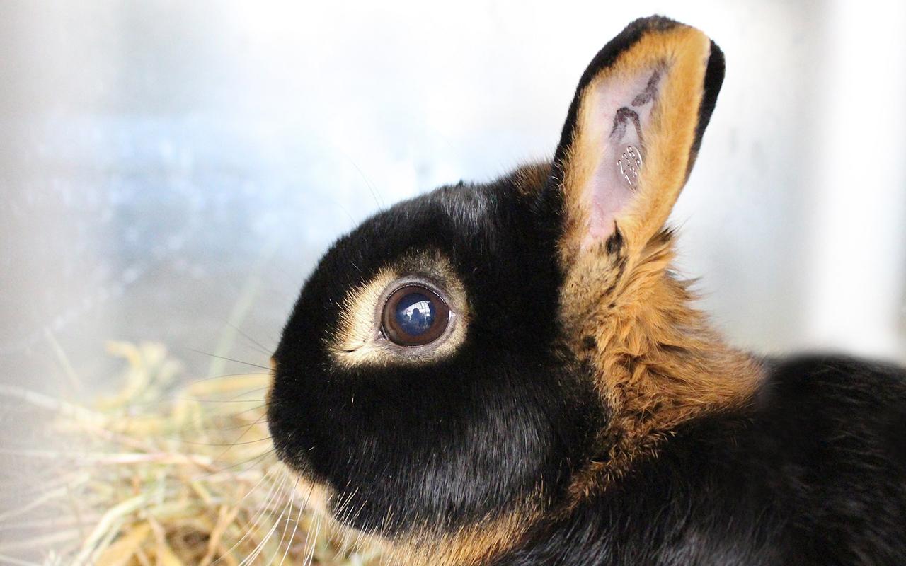 Razze conigli animali pucciosi 04 animali pucciosi for Animali pucciosi
