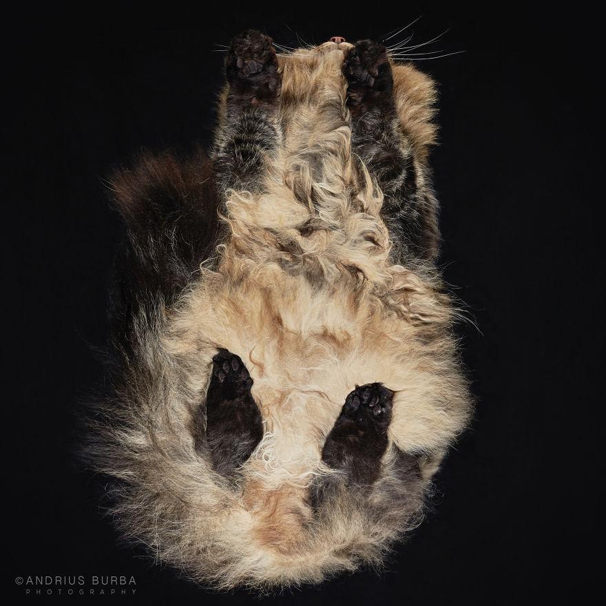 Andrius Burba e le sue foto di gatti dal basso