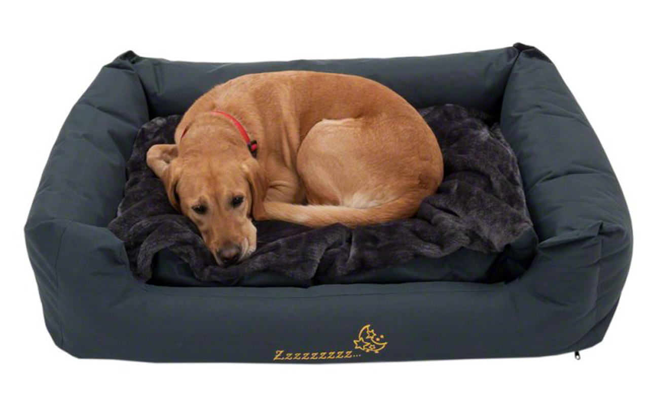 Cucce per cani idee per tutte le taglie animali pucciosi for Recinto per cani taglia grande