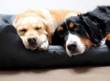 Cucce per cani: idee per tutte le taglie!