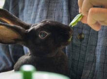 Rabbit Cafè: Direttamente dal Giappone dei bar per conigli