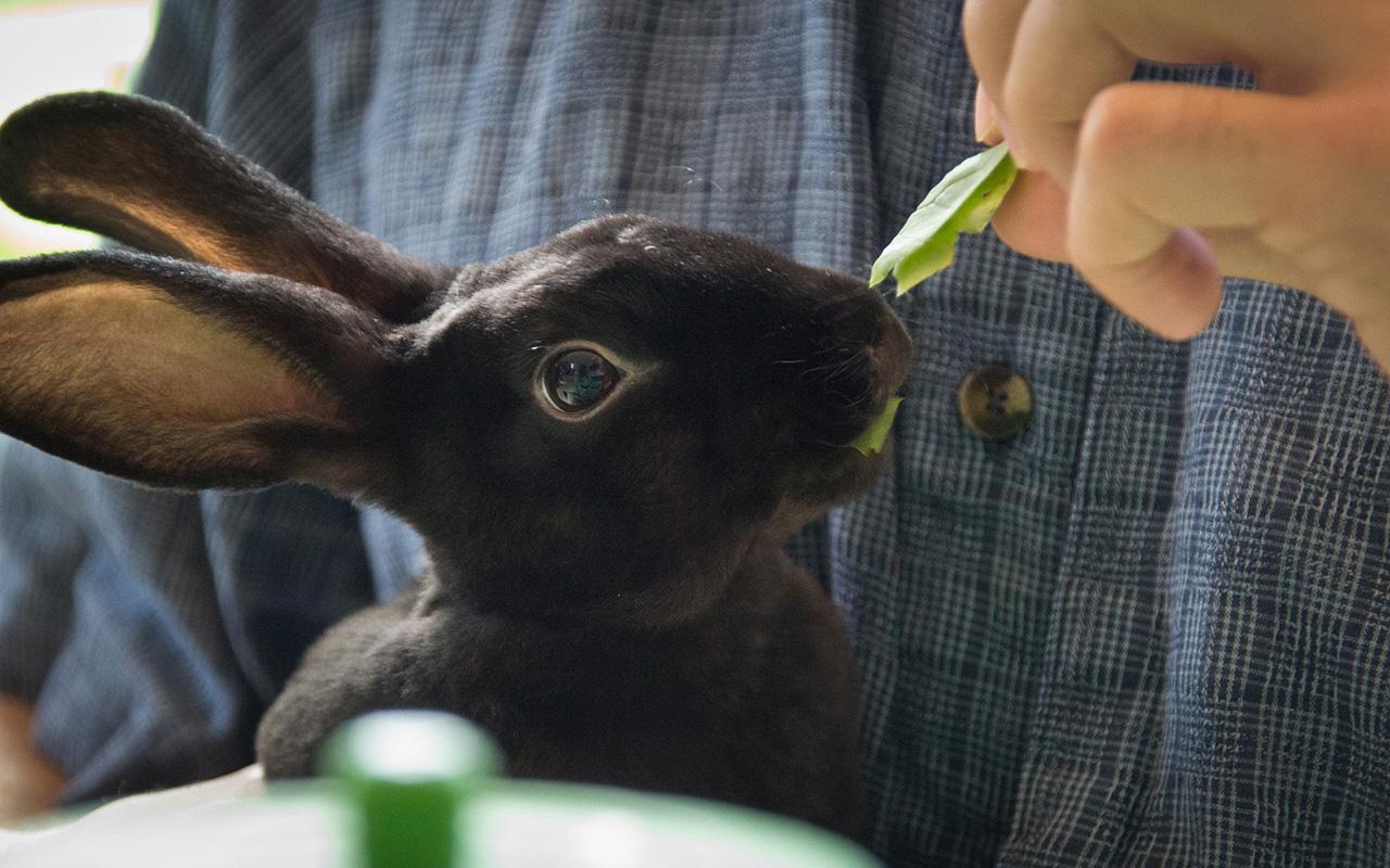 Rabbit caf dei bar per conigli dal giappone animali for Animali pucciosi
