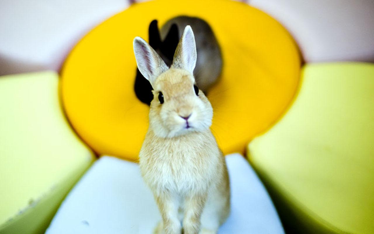 Rabbit Cafè: Dei bar per conigli dal Giappone