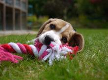 Cane in giardino: 5 step per la sua progettazione!