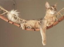 Articoli per gatti: economici e di lusso!