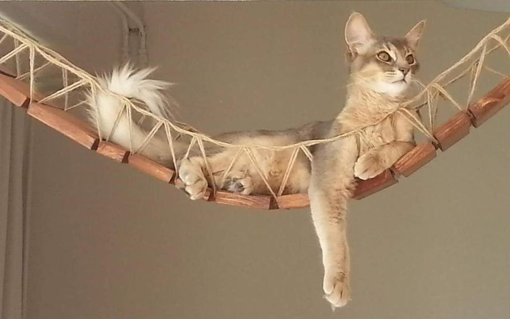 Mobili Per Gatti Fai Da Te : Articoli per gatti economici e di lusso animali pucciosi