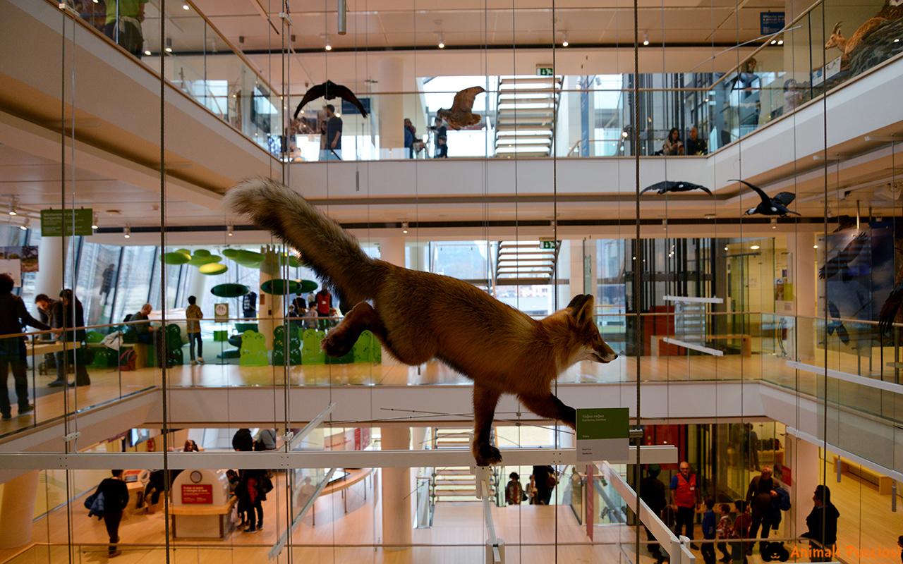 Museo delle scienze di trento il muse animali pucciosi for Piani del centro di intrattenimento della fattoria