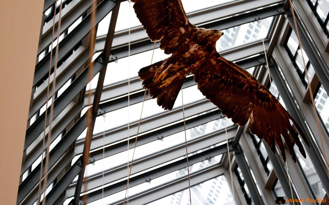 Museo delle scienze di trento il muse animali pucciosi for 1 piano piano di storia