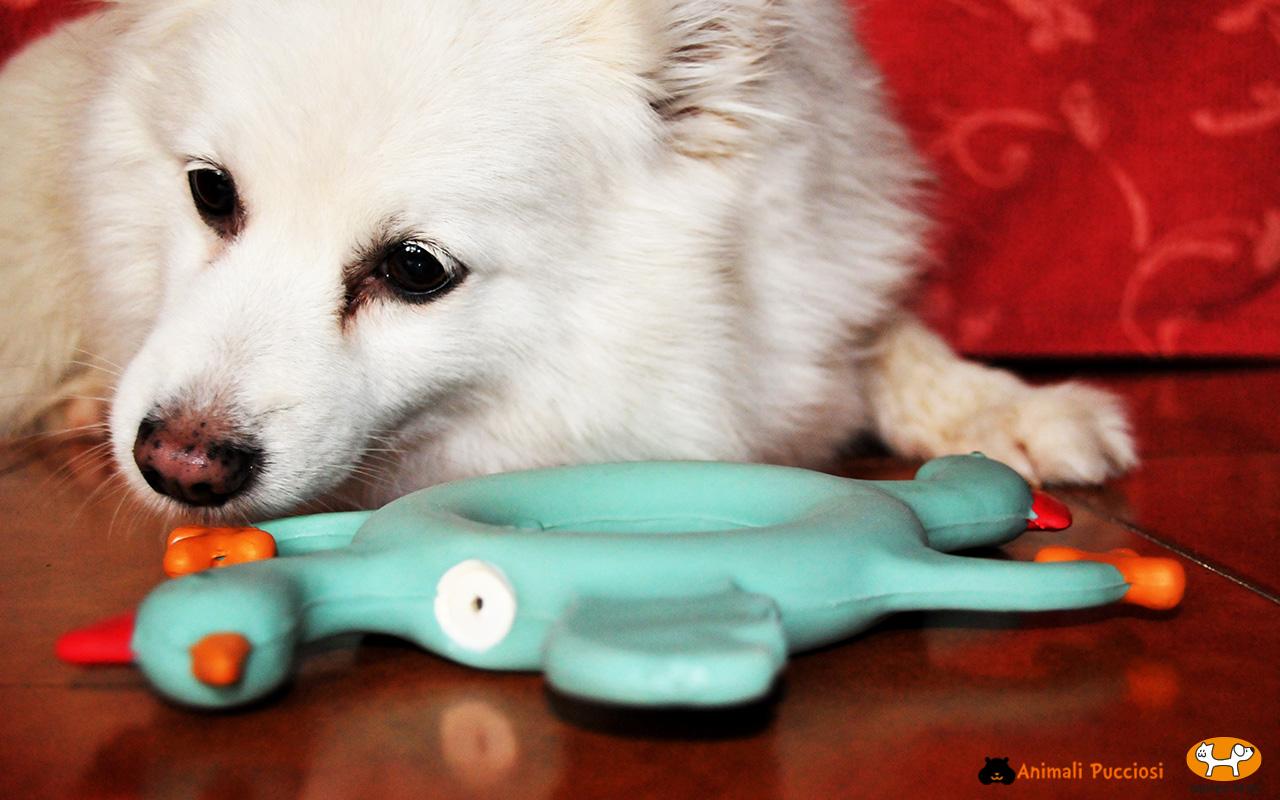 United Pets: Le nostre impressioni e test dei nostri 4 zampe