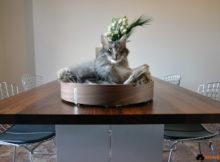 MiaCara Gatto: la linea per i felini più esigenti