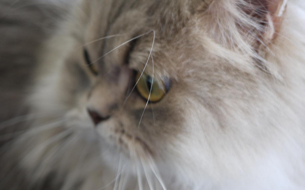 Cambio del pelo: consigli per cani e gatti