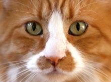 10 curiosità sui gatti!