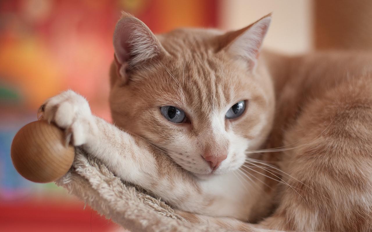 10 curiosit sui gatti animali pucciosi for Animali pucciosi