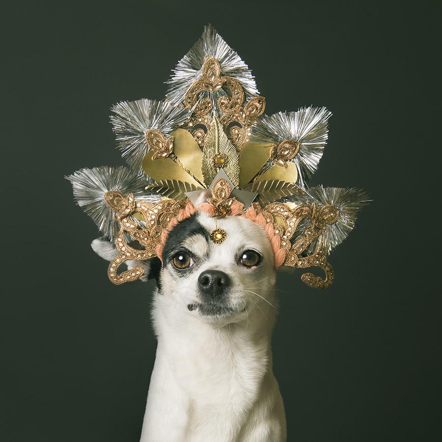 Sophie gamand tra pitbull hippy e cani bagnati animali for Animali pucciosi