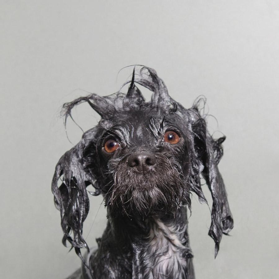 Sophie Gamand: tra Pitbull hippy e cani bagnati