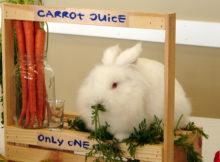 Accessori per conigli: 5 oggetti per arredare una gabbietta con stile!