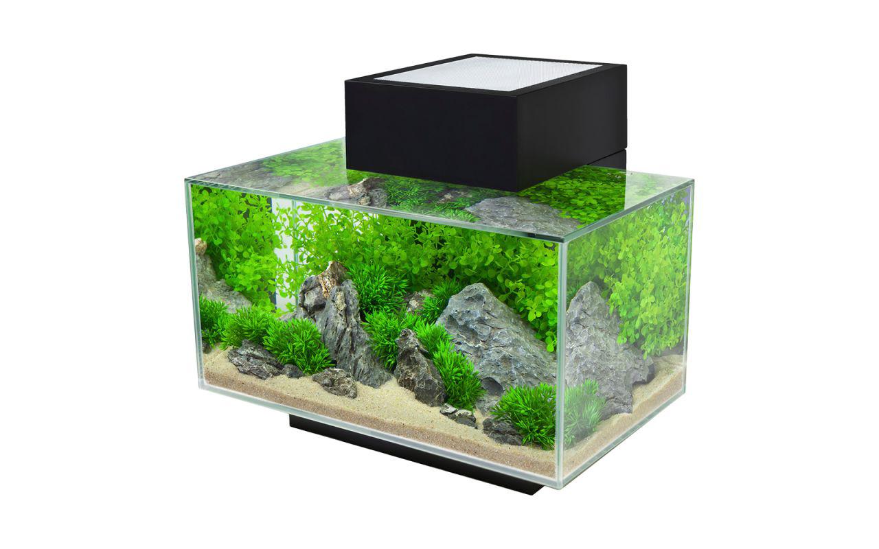 Un acquario di design per arredare casa animali pucciosi for Design di case caraibiche