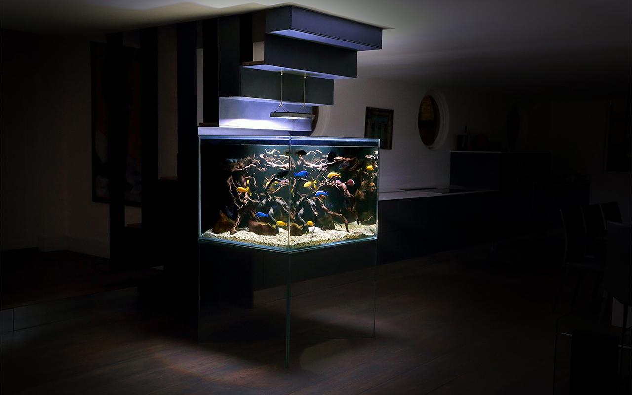 Un acquario di design per arredare casa animali pucciosi - Acquario x casa ...