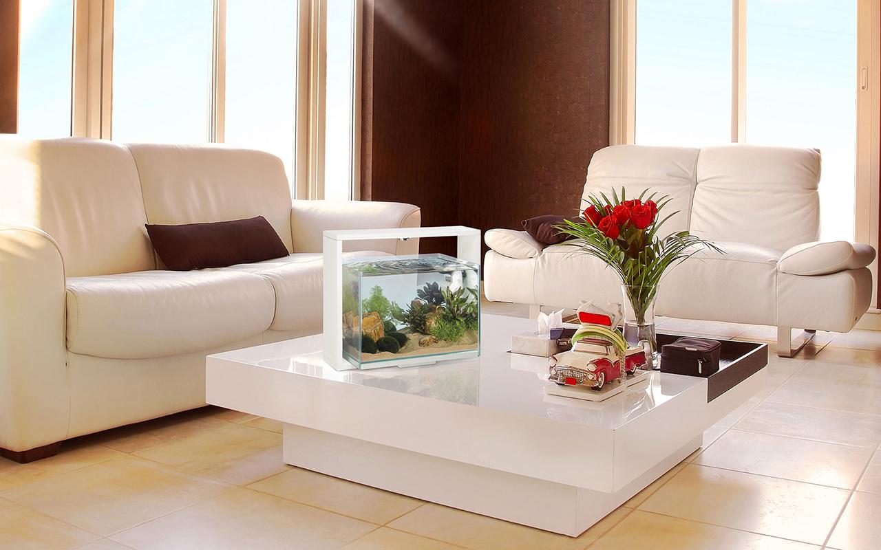Un acquario di design per arredare casa animali pucciosi for Contenitore per pesci
