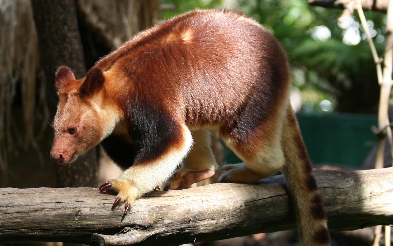 Animali strani e teneri 10 specie incredibili animali for Animali pucciosi