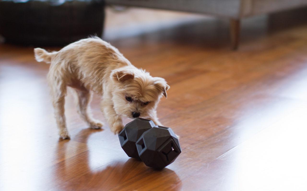 Giochi intelligenti per cani di design animali pucciosi for Animali pucciosi