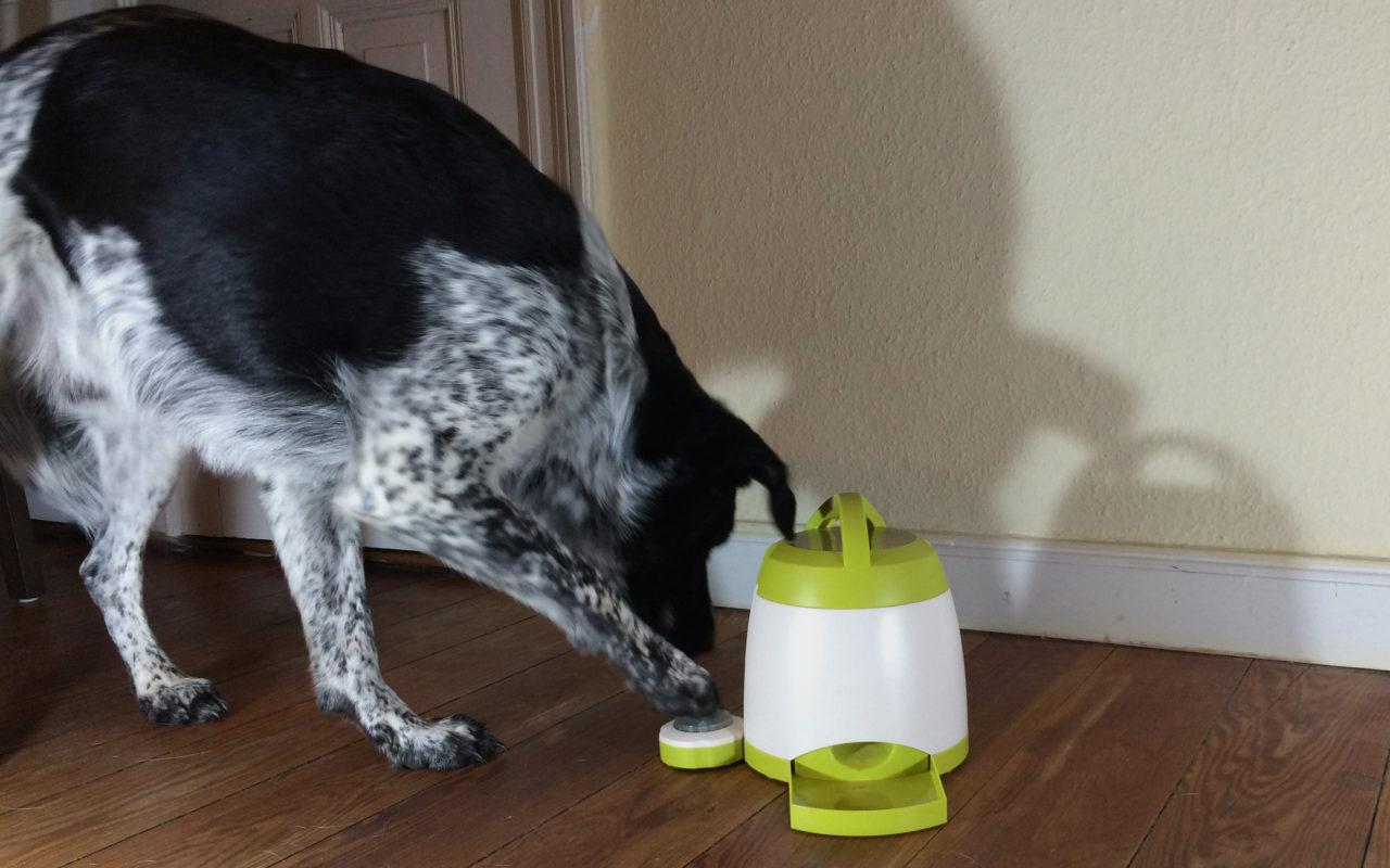 Giochi intelligenti per cani di design!