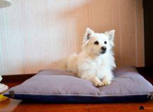 Recensione: un cuscino per cani d'ispirazione giapponese!