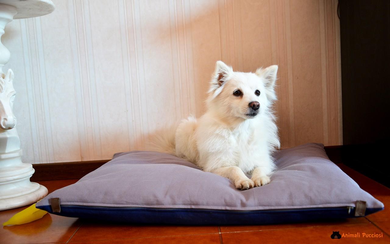 Un cuscino per cani d'ispirazione giapponese