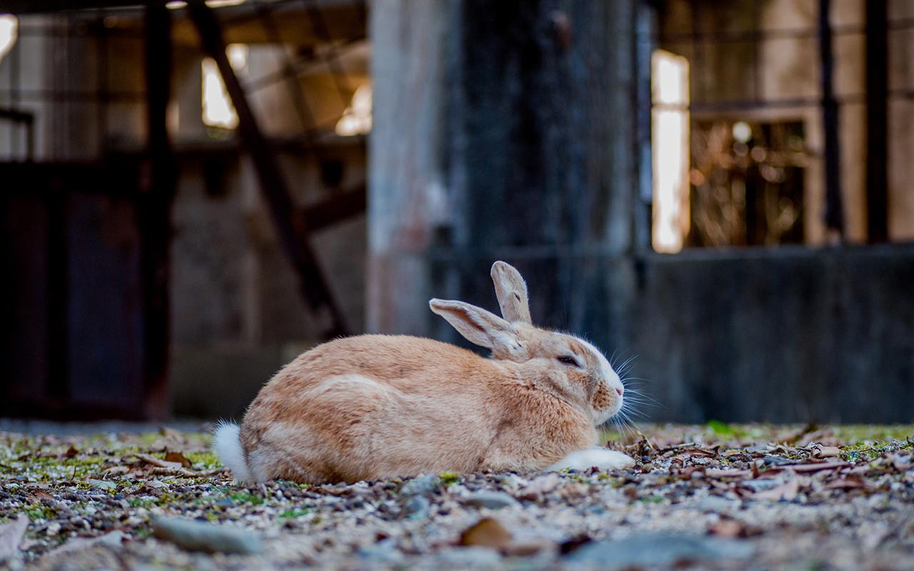 L'isola dei conigli esiste davvero!