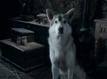 I Metalupi di Game of Thrones esistono davvero?
