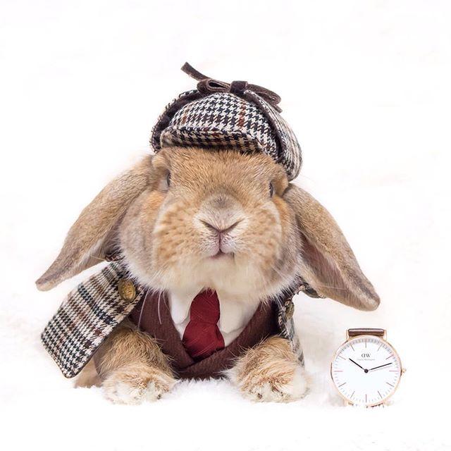 Mumitan: la sarta del coniglio che ha stregato internet