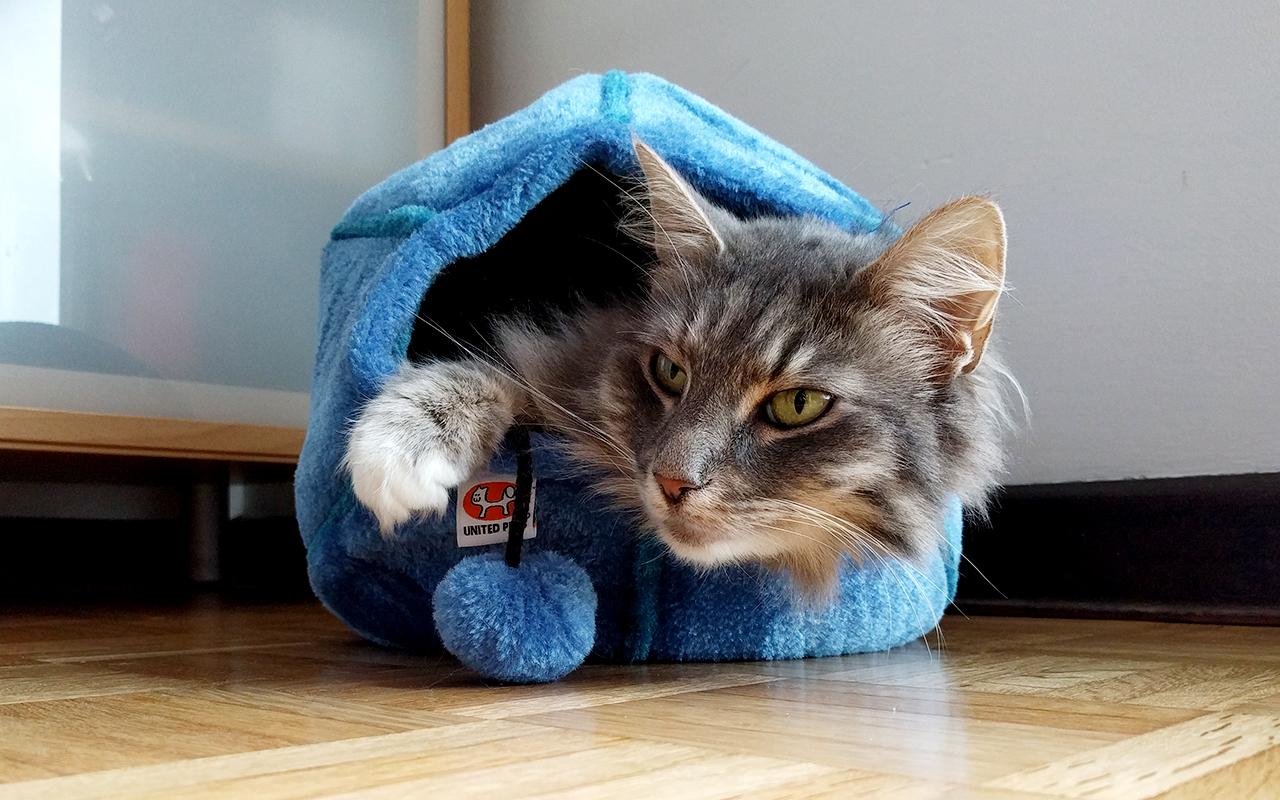 5 nicchie per gatti belle e confortevoli animali pucciosi for Animali pucciosi