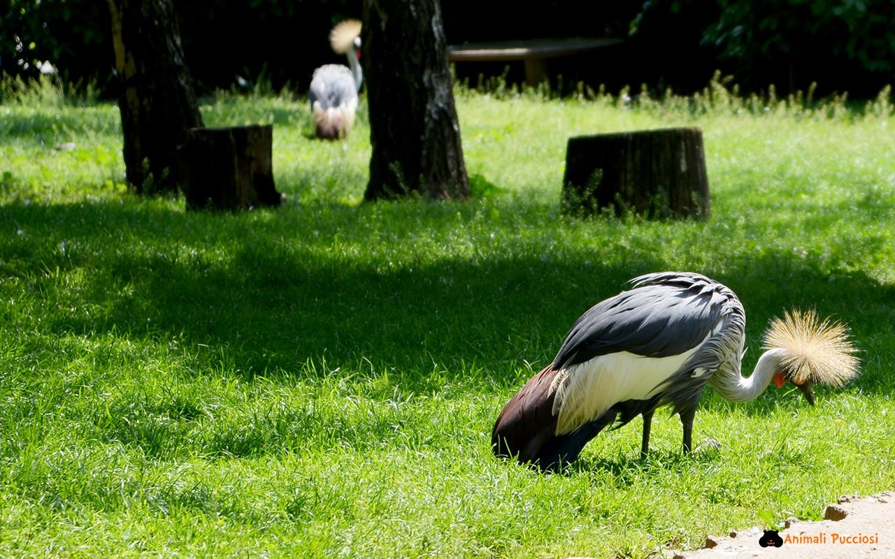 Il Parco delle Cornelle: centro faunistico e di tutela
