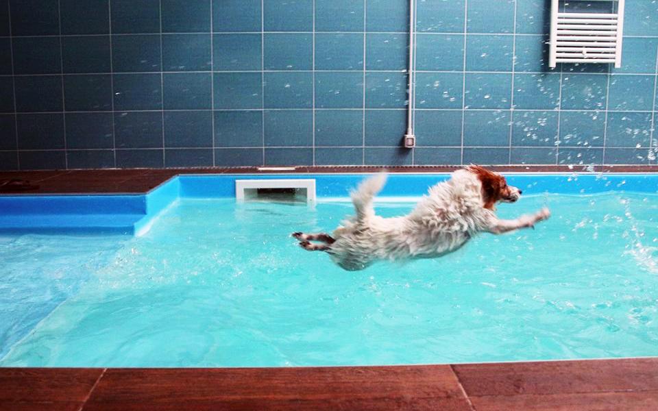 piscina per cani terapeutica cos 39 e dove trovarla On piscina x cani milano